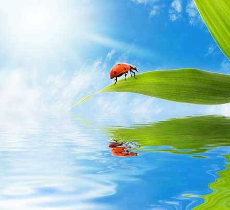 Ladybug sitting on a green leaf reflected in rendered water photo