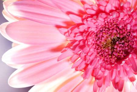 Beautiful pink flower Stock Photo - 2645232