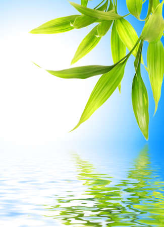 rain japan: Bamboo leaves reflected in rendered water Stock Photo