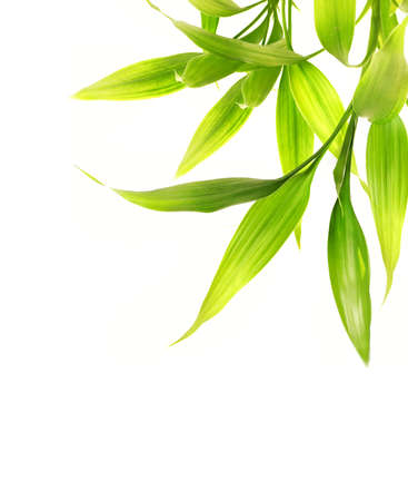 bamboo leaves: Bamboo leaves isolated on white background