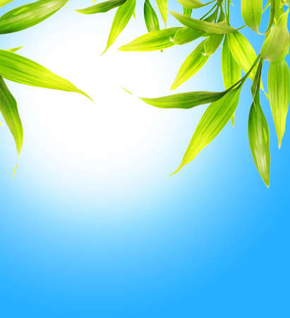 Bamboo leaves over blue sky photo