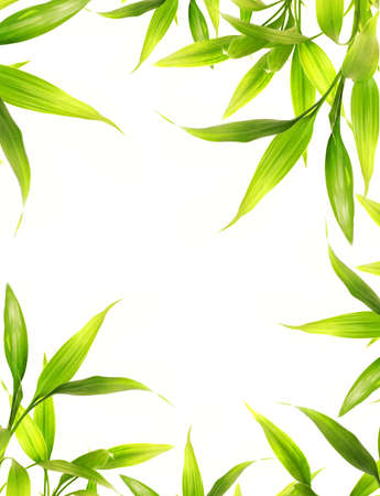 Beautiful bamboo leaves border over white background Stock Photo - 2799742