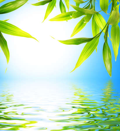 japones bambu: Hojas de bamb� se refleja en el agua prestados