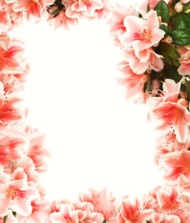 bordure floral: Belle bordure florale