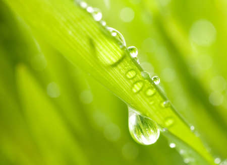 Close-up shot of green grass with rain drops on it Stock Photo - 2861576