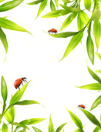 Ladybugs sitting on bamboo leaves photo