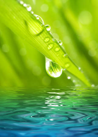 Morning dew on a green grass reflected in rendered water Imagens