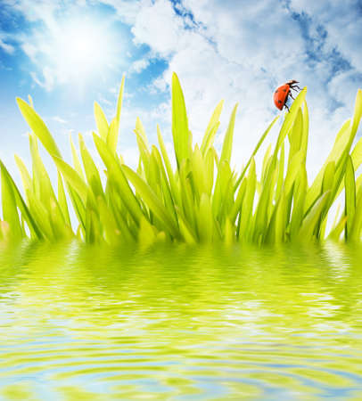 Ladybug sitting on a grass reflected in rendered water Stock Photo - 3001564