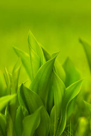 Fresh green grass (shallow DoF) photo