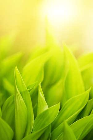 Fresh green grass (shallow DoF) Stock Photo - 3031174