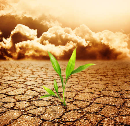 the climate: Green plant growing trough dead soil Stock Photo
