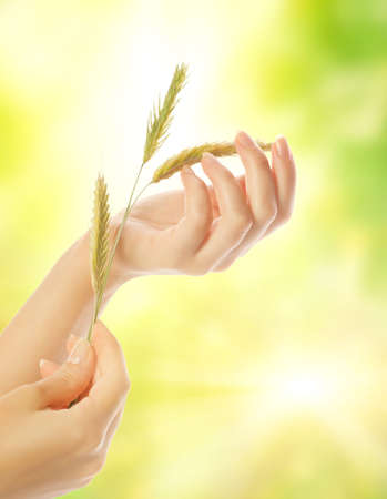 Womans hand with dry herb photo