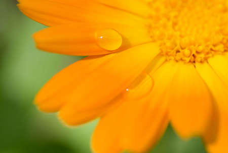 Beautiful flower with water drops on it's petals (Shallow DoF, focus on a drop) Stock Photo - 3306542