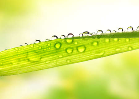 Green grass with rain drops on it photo