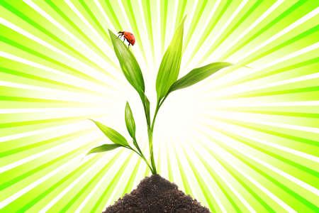 Ladybug sitting on a small plant Stock Photo - 3457857