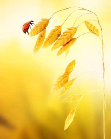 Ladybug sitting on a wheat herb Stock Photo - 3469368