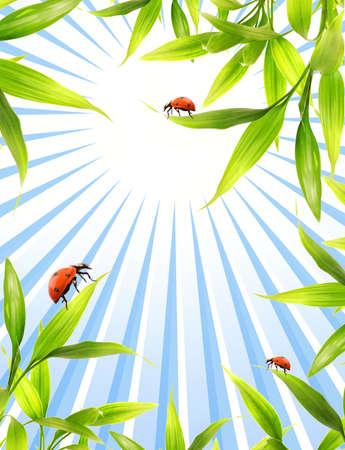 Ladybugs sitting on bamboo leaves Stock Photo - 3704481