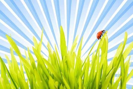 Ladybug sitting on a green grass Stock Photo - 3704480