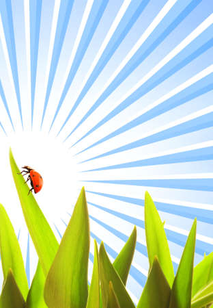 Ladybug sitting on a green grass Stock Photo - 3704477