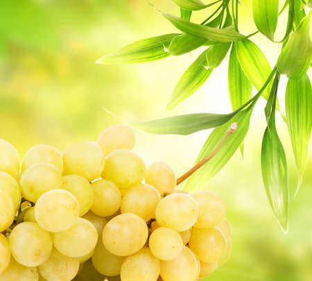 vinery: Ripe grapes over abstract green background