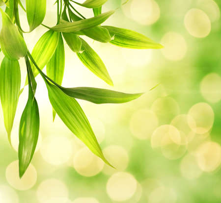 Bamboo leaves over abstract blurred background Stock Photo
