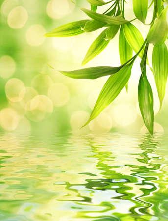 japones bambu: Hojas de bamb� se refleja en el hecho de agua Foto de archivo