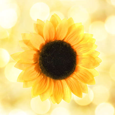 Sunflower over abstract background photo