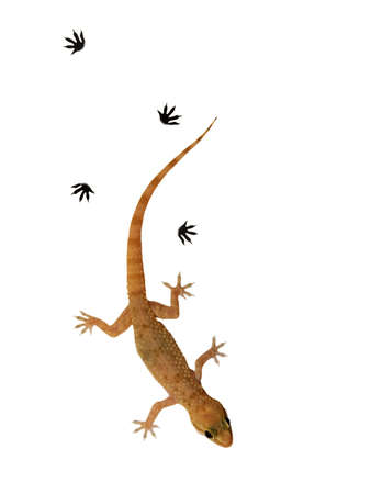 Small lizard over white background photo