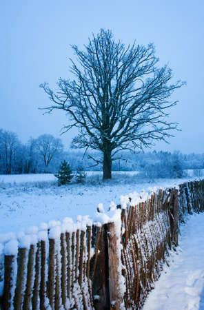 Beautiful winter scenic photo