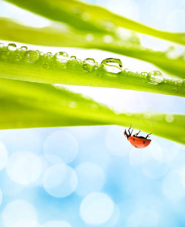 Ladybug on a green grass photo