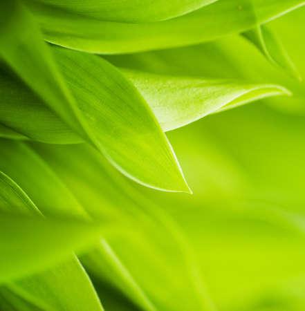 dof: Fresh green grass (shallow DoF)