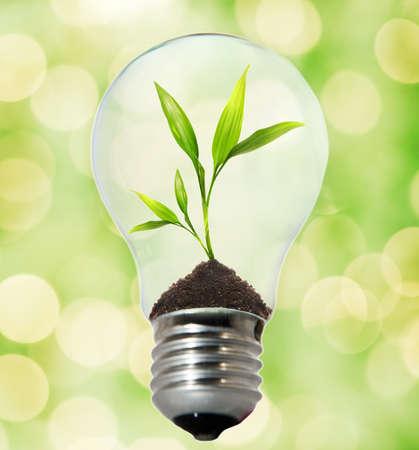 eficacia: El medio ambiente de bulbo Foto de archivo