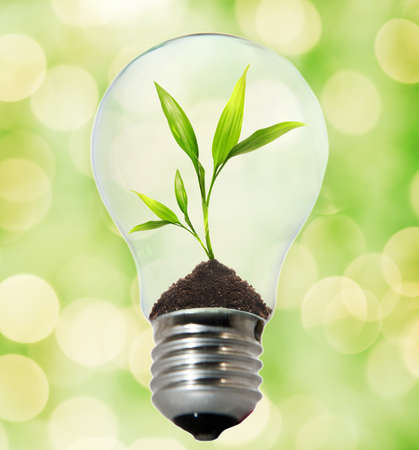 Environment friendly bulb Stock Photo - 4003415