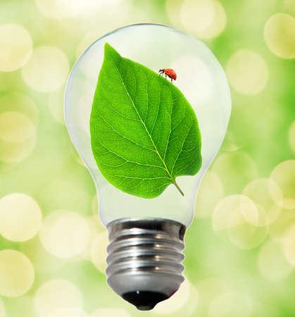 Environment friendly bulb Stock Photo - 4003416