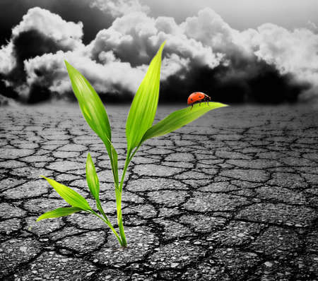 soil pollution: Green plant growing trough dead soil Stock Photo