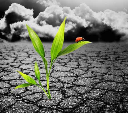 Green plant growing trough dead soil Stock Photo - 4045623