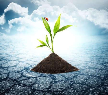 desert animals: Verde pianta cresce attraverso morti suolo