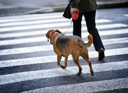 Man met een hond die de straat Stockfoto