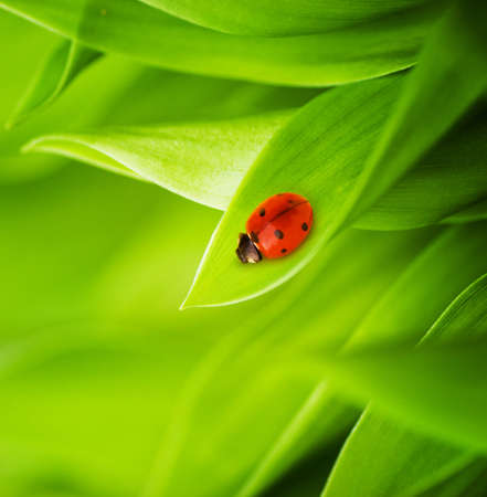 Ladybug sitting on a fresh green grass (shallow DoF) photo