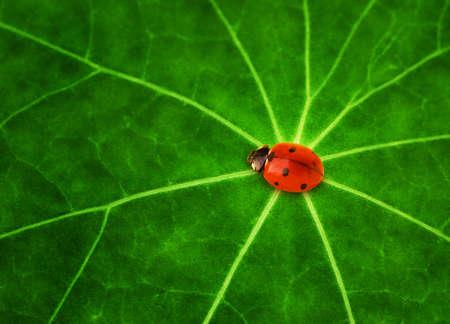 Ladybug sitting on a green leaf Stock Photo - 4256500