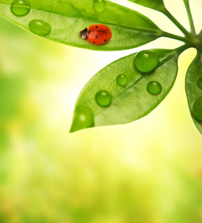 Ladybug sitting on a green leaf. Stock Photo