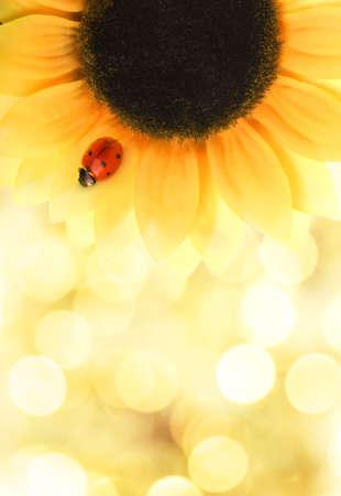 Ladybug sitting on a sunflower photo