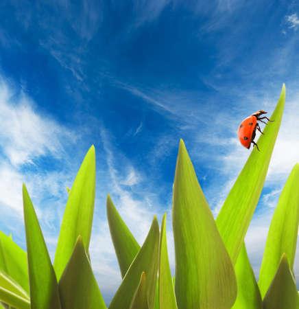 Ladybug sitting on a green grass photo