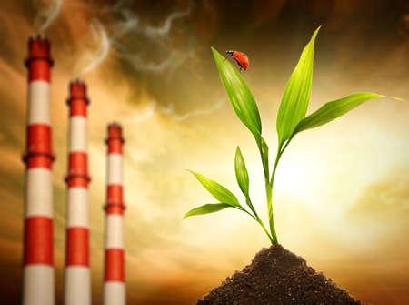 contaminacion del medio ambiente: Ecolog�a en peligro