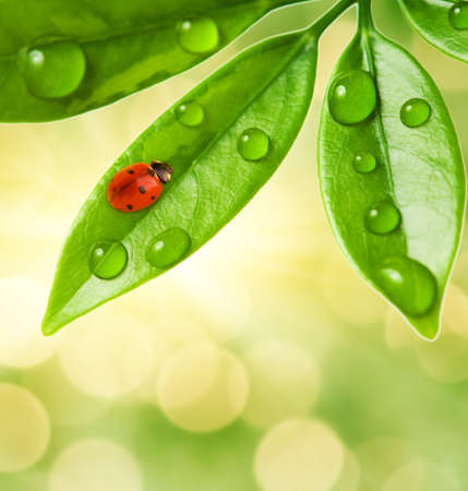 Ladybug sitting on a green leaf. photo