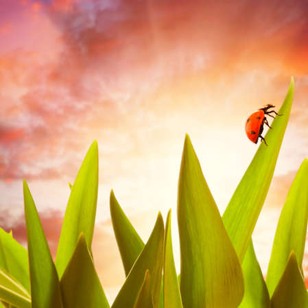 Ladybug sitting on a green grass Stock Photo - 4585213
