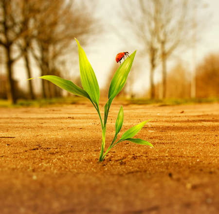 soil pollution: Fresh green grass growing through dry soil Stock Photo