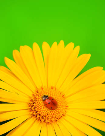 Ladybug on yellow flower Stock Photo - 4837564