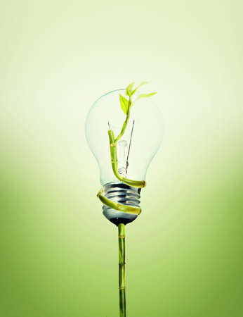 Environment friendly bulb  Stock Photo - 5140884