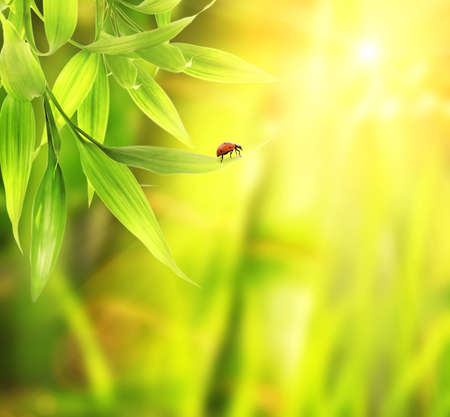 jungle animal: Ladybird sitting on a bamboo leaves